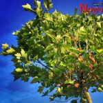 Noworudzkie święto drzewa