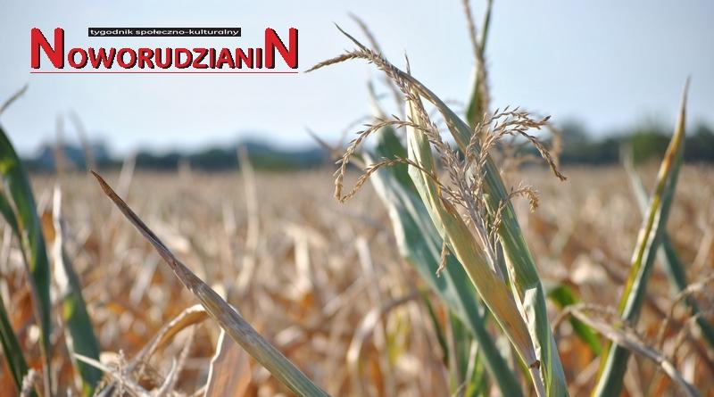 Rolnicy gminy Nowa Ruda bez odszkodowań