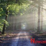 Od dzisiaj zakaz wstępu do lasów