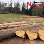 Wycinka drzew wokół Nowej Rudy